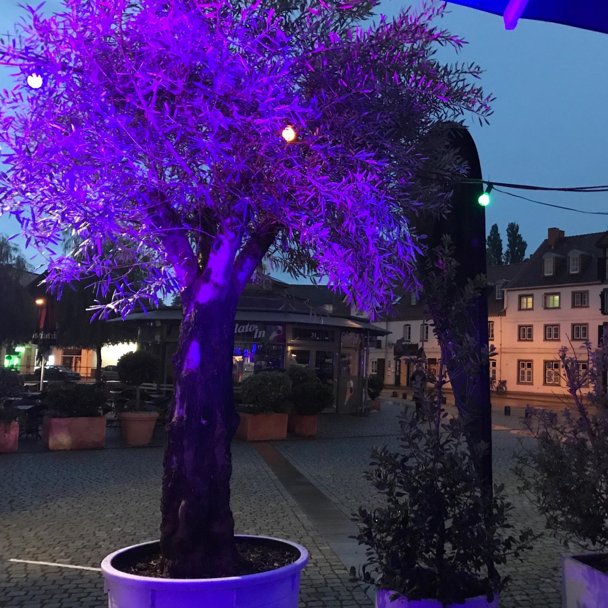 Restaurant-Wedel-Mühlenstein-Burger-Pizza-Brunch-Afterwork Außenbereich